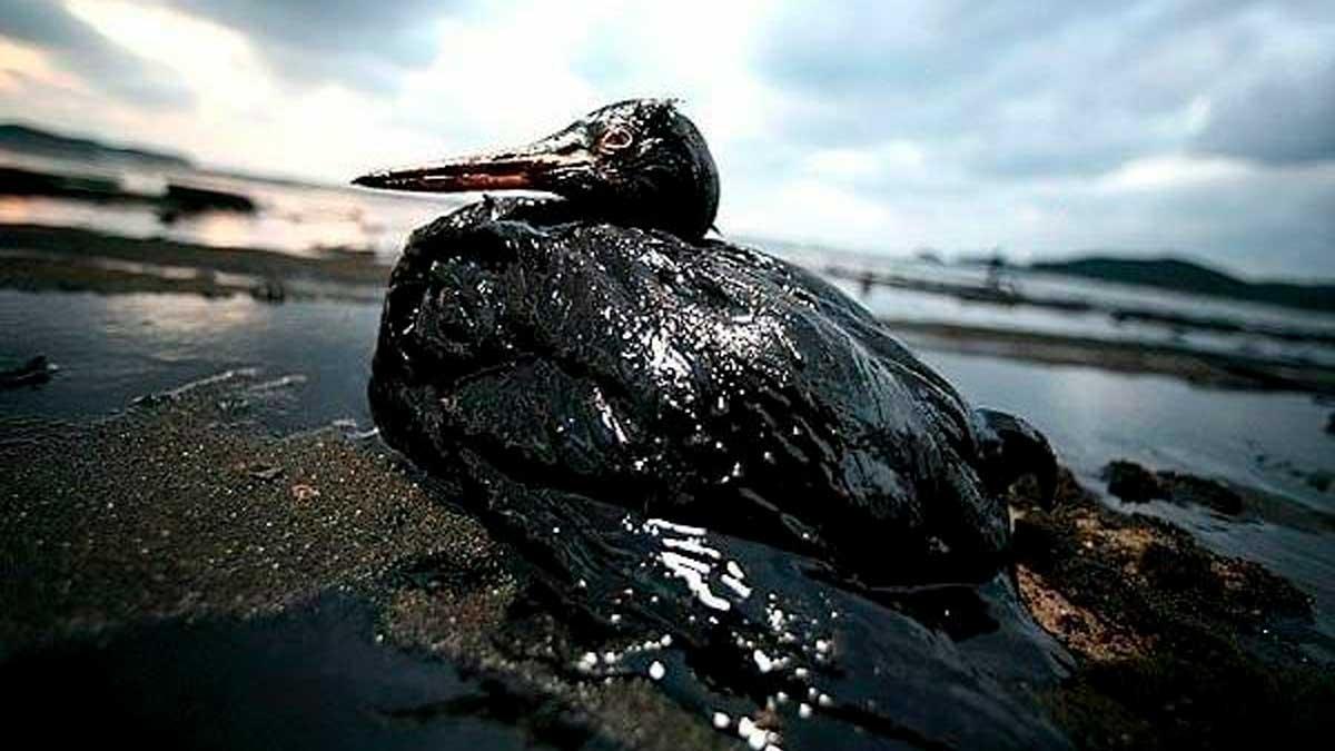 Derrame de petroleo en Venezela