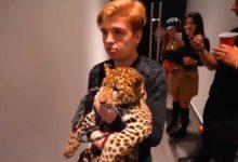Photo of Primero un tigre, ahora un jaguar en fiesta patria