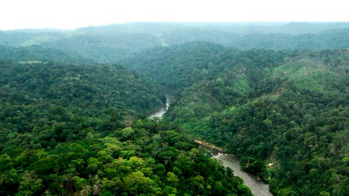 Selva de los Chimalapas
