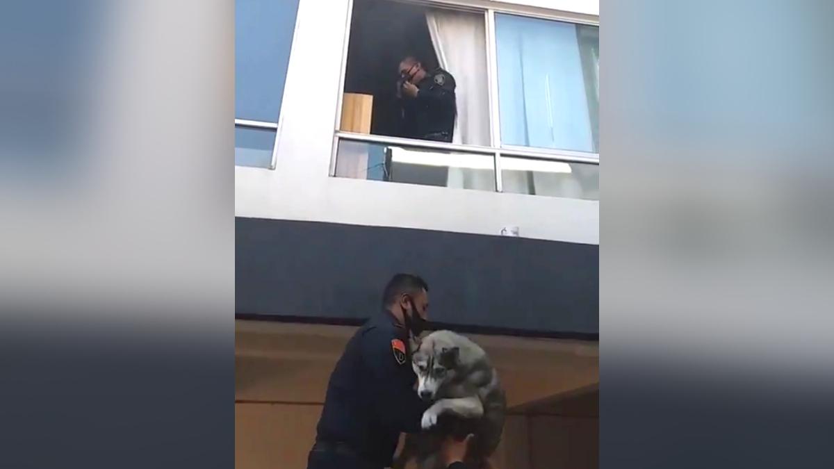 Policias salvan perrito
