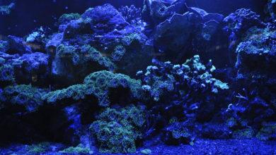 Photo of La Gran Barrera de Coral disminuyó un 50%