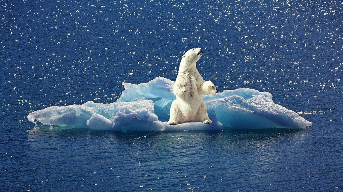 Oso polar en iceberg