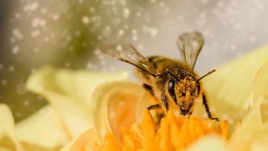 Photo of Se crea el primer mapa mundial de distribución de abejas