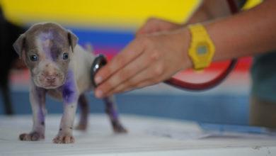 Photo of Se inaugura en Tlatelolco consultorio veterinario con consultas gratuitas