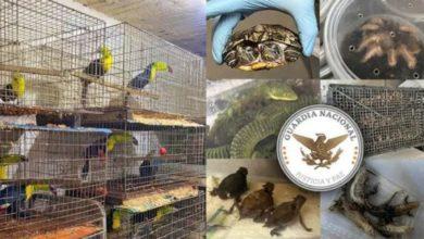 Photo of Se recuperaron 15 mil animales protegidos en dos casas en Iztapalapa