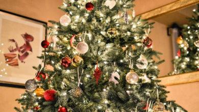 Photo of ¡Renta tu arbolito de navidad y ve a visitarlo 6 meses después!