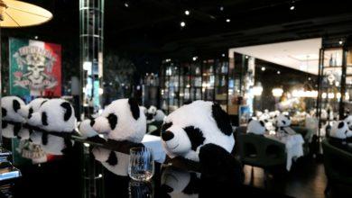 Photo of Restaurante alemán protesta contra las restricciones por COVID-19 con pandas de peluche