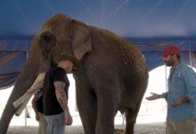 Elefante Big Boy