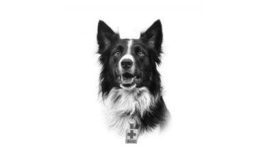 Perro Cruz Roja