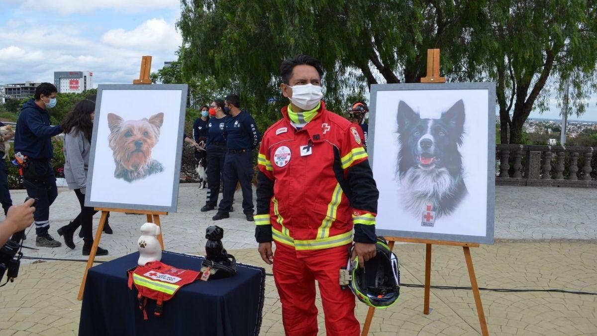 Perros Cruz Roja