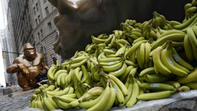 Gorila Wall Street