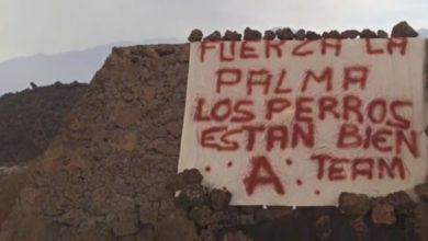 Perros desaparecen La Palma